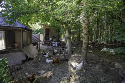 chickencoop